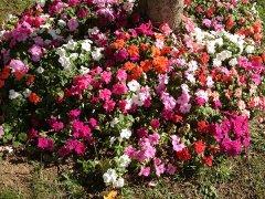 Flowers-030.jpg