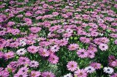 daisys2.jpg