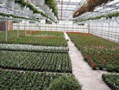 Greenhouse4.jpg