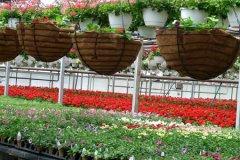 schaefers-gardens-openhouse-042812-geraldineclark-(15).jpg